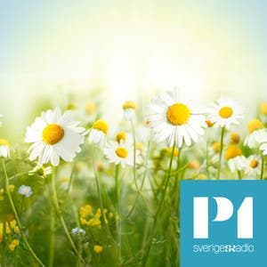 Sommar i P1 - Sveriges Radio