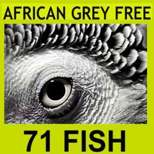 71 Fish