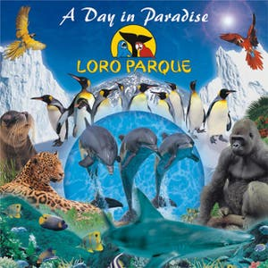A Day In Paradise