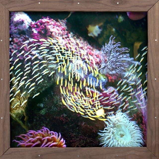 Quicksails image