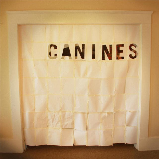 Canines