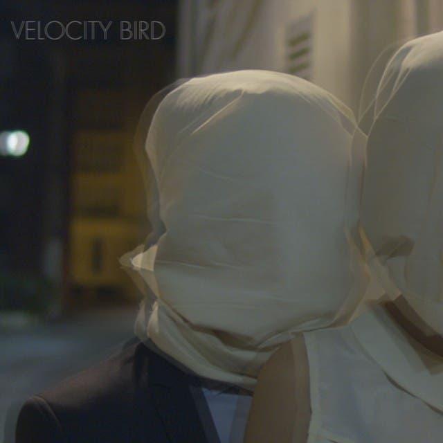 Velocity Bird