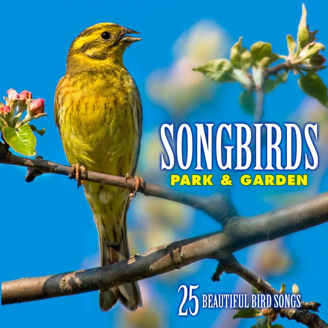 Echoes Of Nature: Bird Songs, Calls & Sounds image